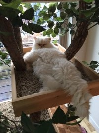 Page 2 - Pet Tree Houses: Real Cat Trees With Leaves