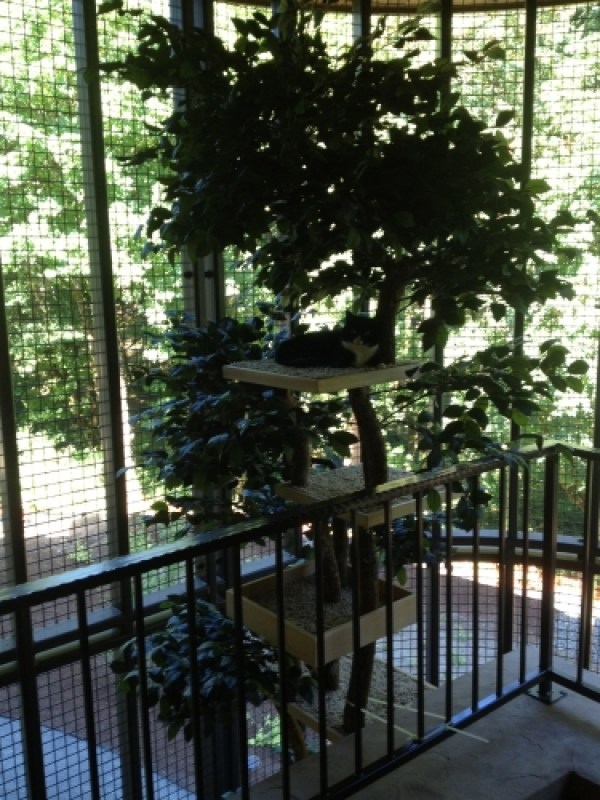 Custom/Special Needs Trees - 20\' Tall 2 Story Tree