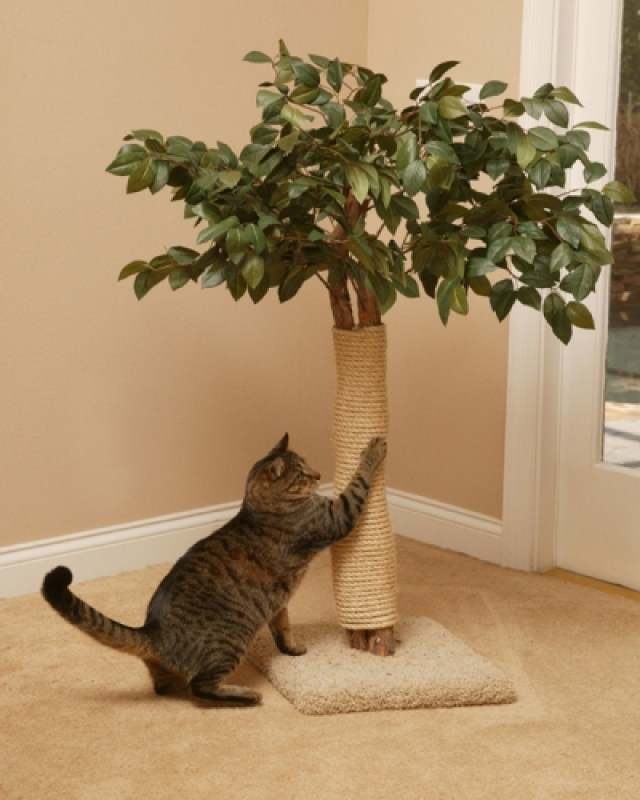 Scratching Tree with Buster in home setting