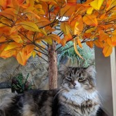 Diesel-with-Fall-Leaves