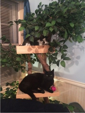 Page 3 - Pet Tree Houses: Real Cat Trees With Leaves
